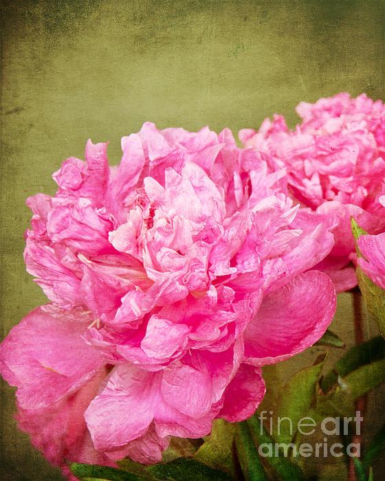 Bob and Nancy Kendrick - Pink Peony Texture 2