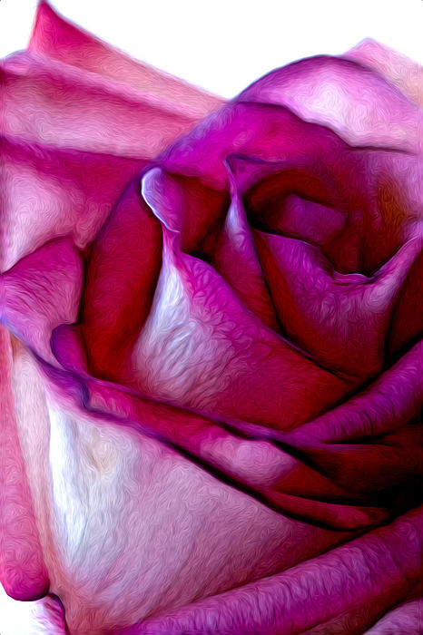 Pinked Rose Details Print by Bill Tiepelman