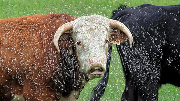 Rick Rauzi - Plastic Cow