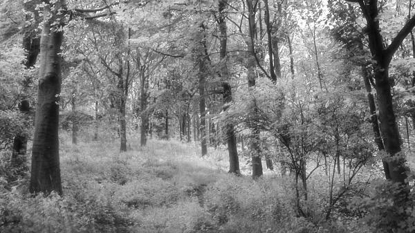 Platinum Forest Print by Sarah Couzens