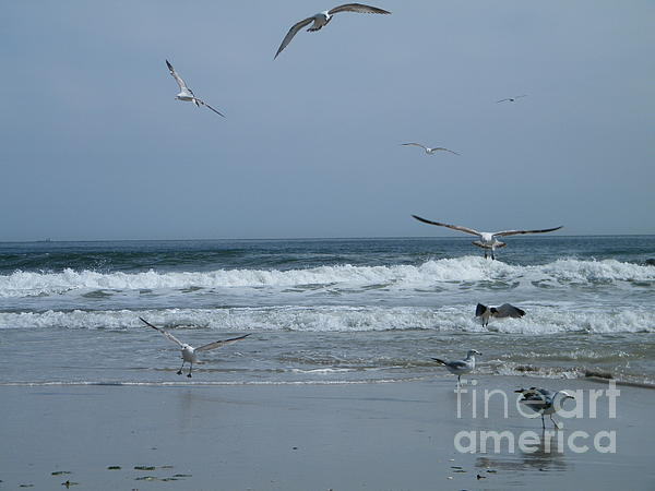 Playful Gulls Print by Laurence Oliver