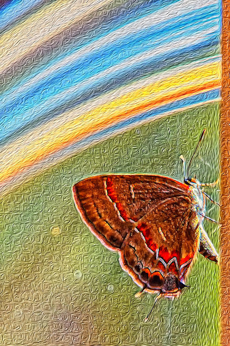 Playroom Butterfly Print by Bill Tiepelman