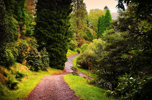 Pleasant Path. Benmore Botanical Garden. Scotland Print by Jenny Rainbow