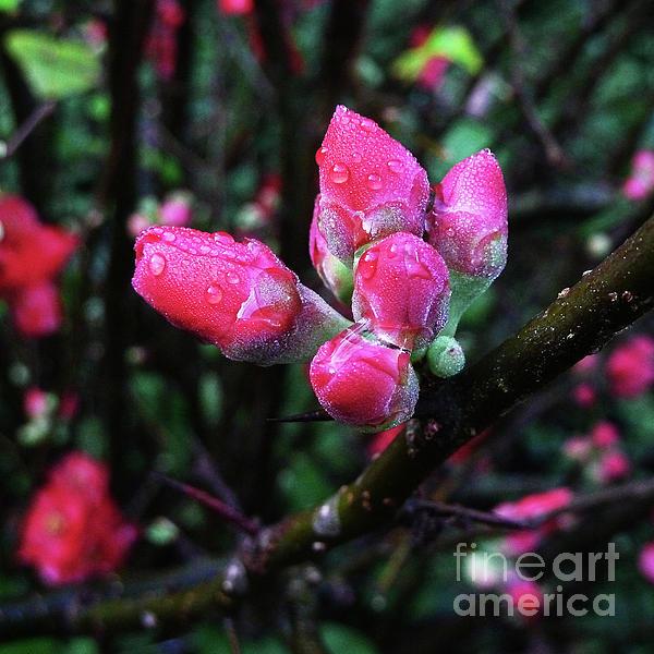 Xueling Zou - Plum Blossom 1