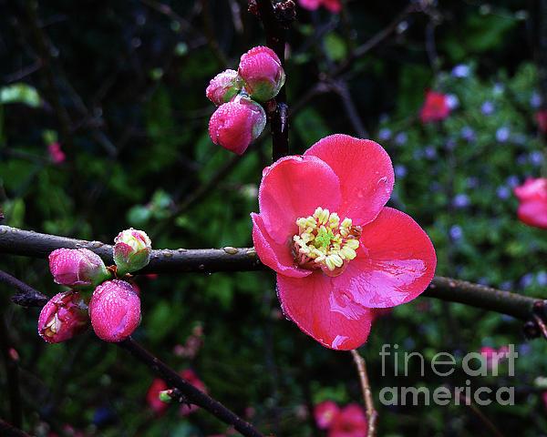 Xueling Zou - Plum Blossom 2