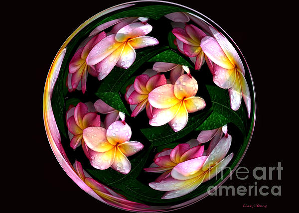 Plumeria Tile Ball Print by Cheryl Young