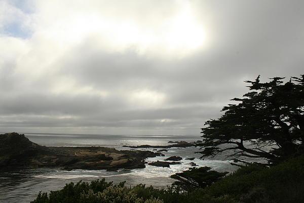 Point Lobos View Print by Suzanne Lorenz