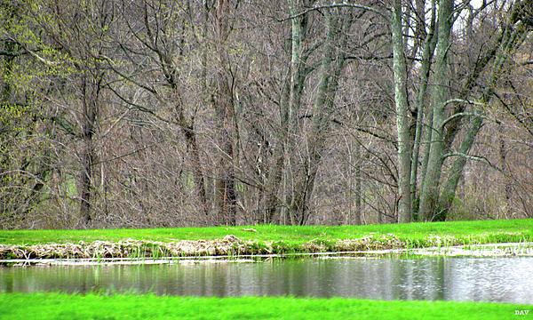 Pond Starts To Grow Print by Debra     Vatalaro