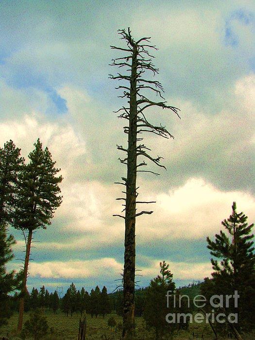 Ponderosa Pine Snag Print by Michele Penner