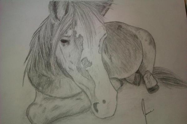 Pony Print by Jamie Mah