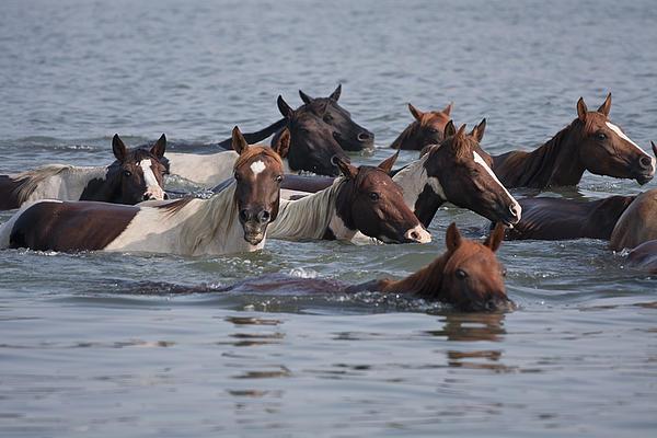 Mary Jo Taft - Pony Swim