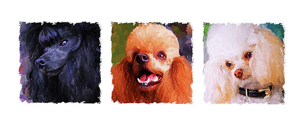 Poodle Trio Print by Jai Johnson