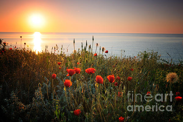 Poppies In The Sunrise Print by Ionut Hrenciuc