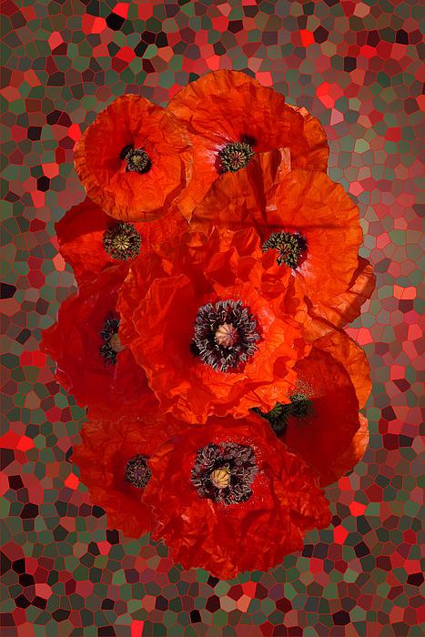 Poppies Print by Nigel Chaloner