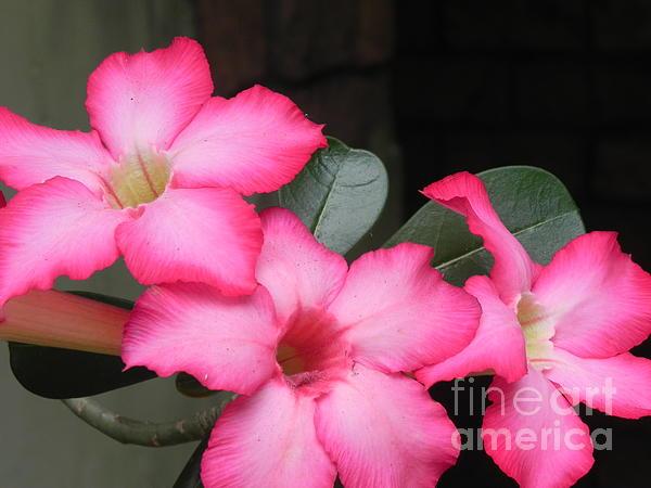 Chrisann Ellis - Poppin Pink Flowers