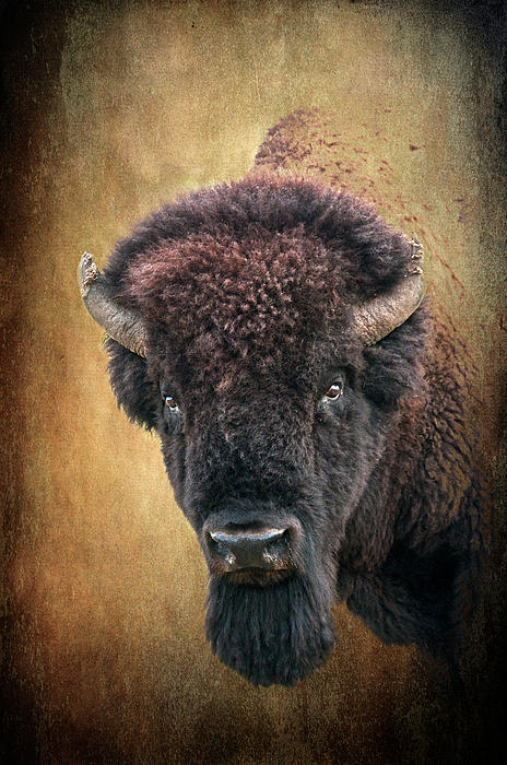 Portrait Of A Buffalo Print by Tamyra Ayles