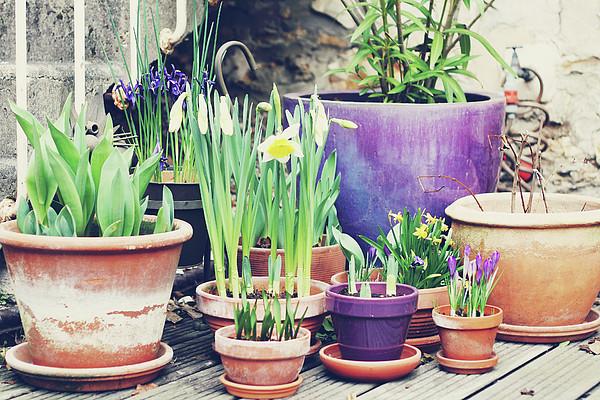 Pot Plants Print by Lespetitsriens