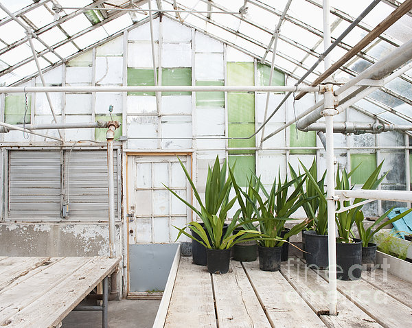 Potted Plants In A Greenhouse Print by Thom Gourley/Flatbread Images, LLC
