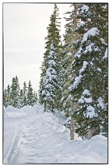 Powdery Snow Path Print by Lisa  Spencer