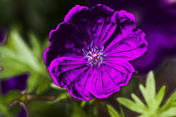 Steve Buckenberger - Powered Flower