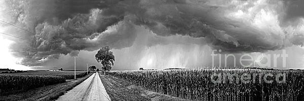 Sue Stefanowicz - Praying For Grain