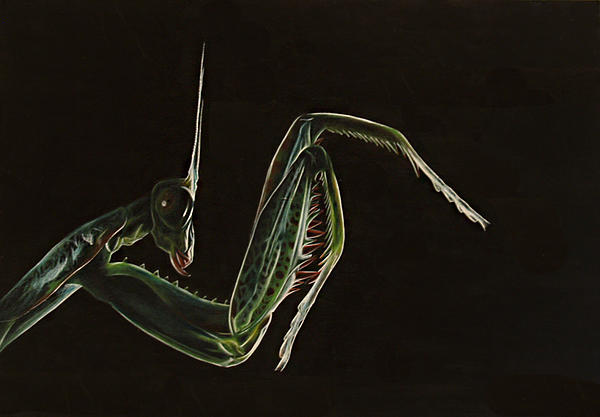 Jessica Farley - Praying Mantis