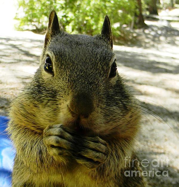 Praying Nuts Print by DJ Laughlin