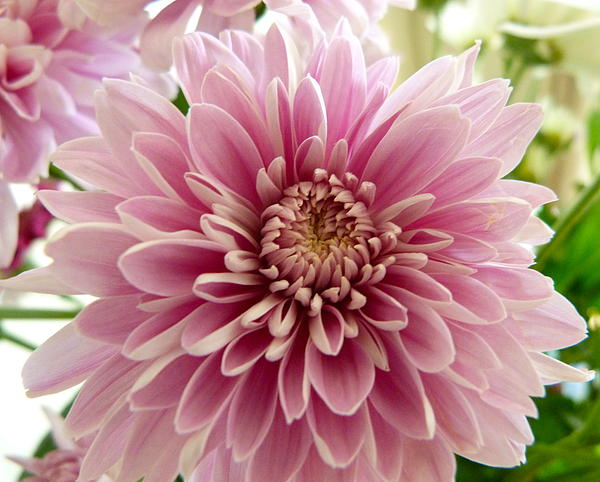 Karen Grist - Pretty in pink