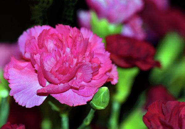 Sandi OReilly - Pretty In Pink