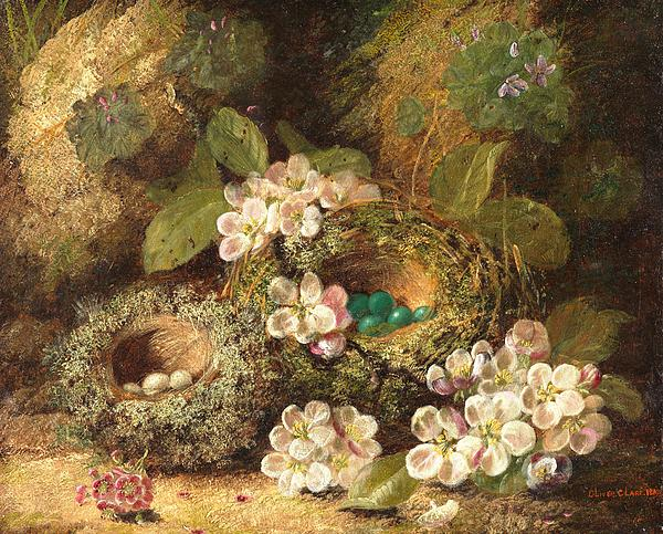 Primroses And Bird's Nests On A Mossy Bank Print by Oliver Clare
