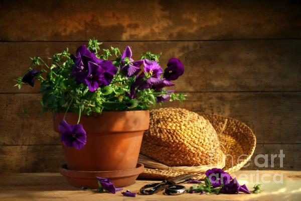 Pruning Purple Pansies Print by Sandra Cunningham