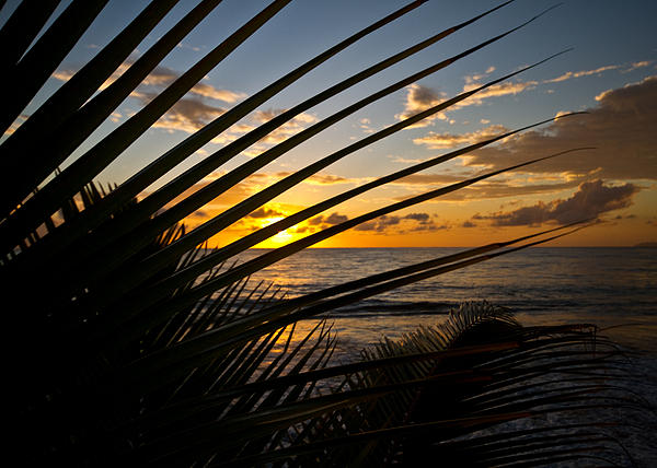 Puerto Rican Sunset IIi Print by Tim  Fitzwater