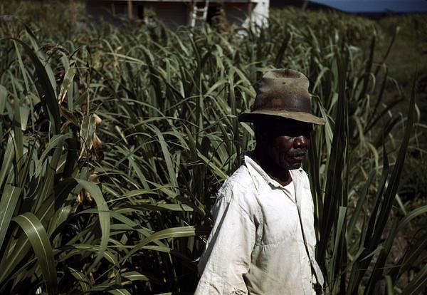 Puerto Rico. Tenant Farmer Print by Everett