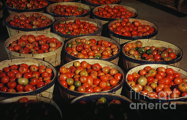 Puerto Rico: Tomatoes Print by Granger