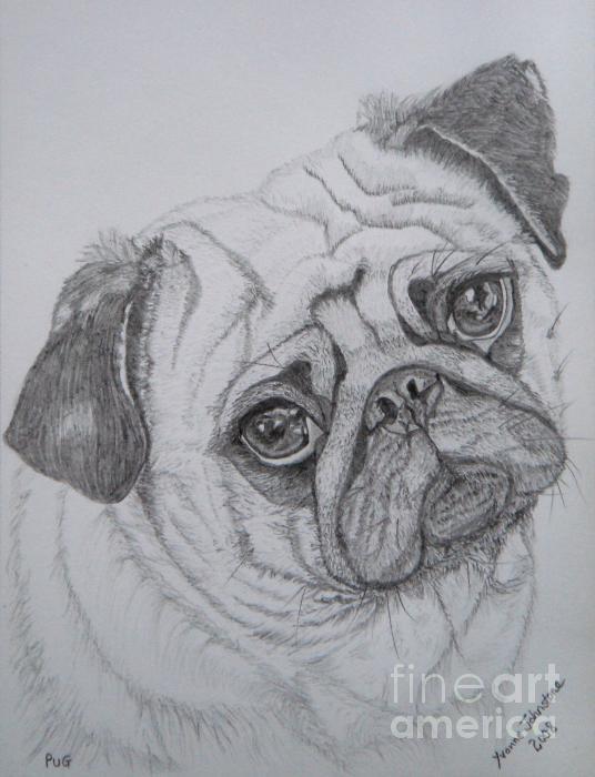 Pug Print by Yvonne Johnstone