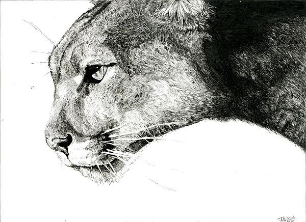 Puma  Print by Ian Tullock