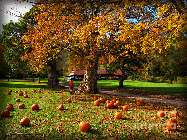 Pumpkin Picking Print By Joan Minchak