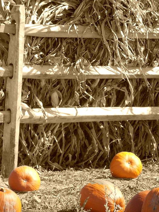 Kimberly Perry - Pumpkins by the Fence