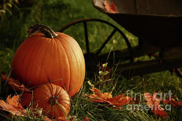 Pumpkins In The Grass Print by Sandra Cunningham