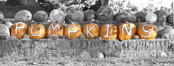 Pumpkins P U M P K I N S Bwsc Print by James BO  Insogna