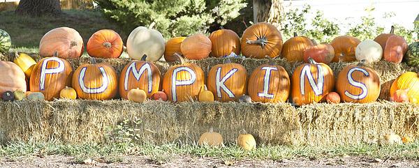 Pumpkins P U M P K I N S Print by James BO  Insogna