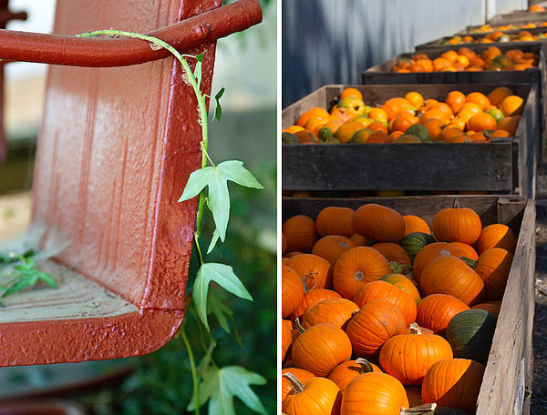 Pumpkins Print by Rebecca Cozart