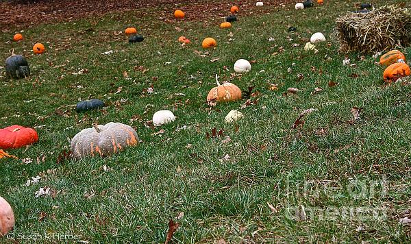 Pumpkins Print by Susan Herber