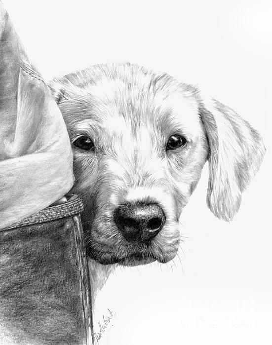 Puppies And Wellies Drawing  - Puppies And Wellies Fine Art Print