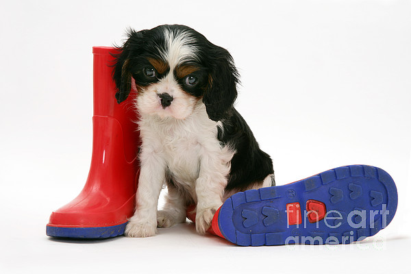 Puppies With A Childs Rain Boots Print by Jane Burton
