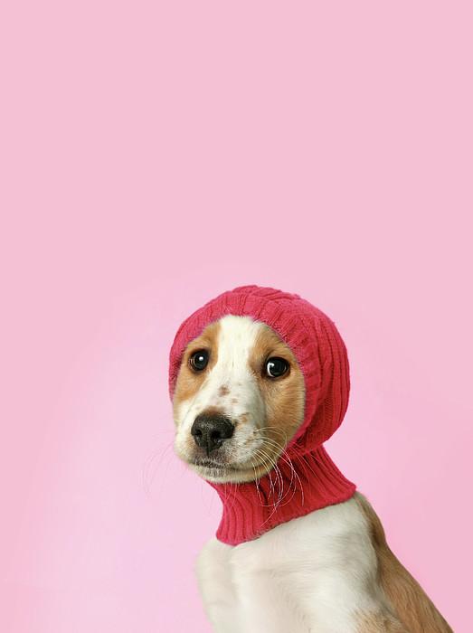 Puppy With Hat Print by Retales Botijero