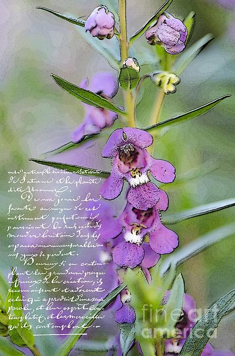 Betty LaRue - Purple Beauty