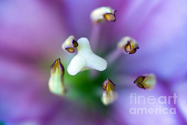 Purple Botanical Print by Frank Tschakert