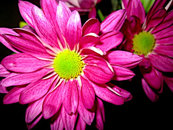 Brooke Hunnicutt - Purple Daisy