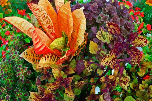 Purple Flowers Print by Michael Thomas